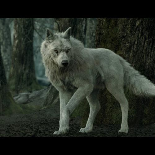 """The Wolf"" - Base fx, Alireza Akhbari"