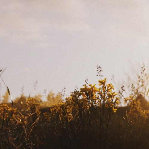 """""""Sunset Impression"""" - Anna Fedyukina"""