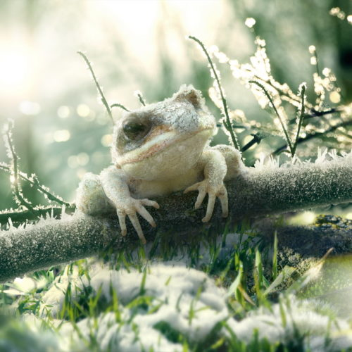 """Frog - Surface"" - Platinum FMD, Flavio Albino, Flavio Teixeira, Rafael Dioli"
